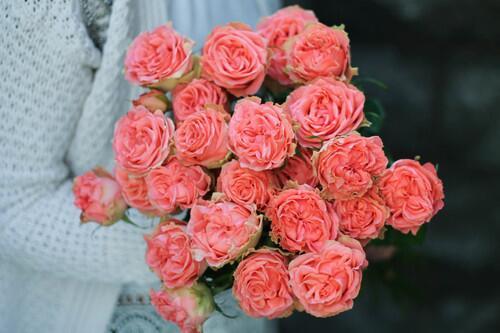 Кустовая роза Big Success