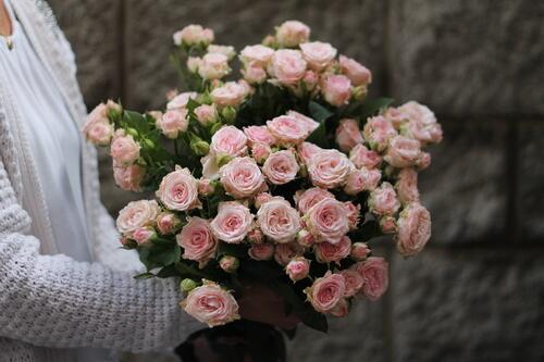 Кустовая роза Aerobic