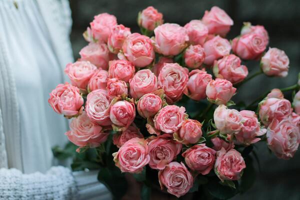 Кустовая роза Madam Bombastic