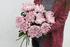 Хризантема Виена Пинк (Chrysanthemum Vienna Pink)