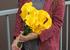 Калла желтая (yellow Сalla)