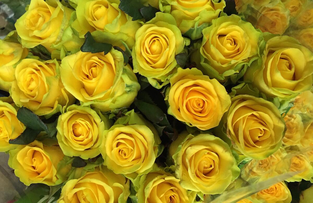 Роза Penny Lane