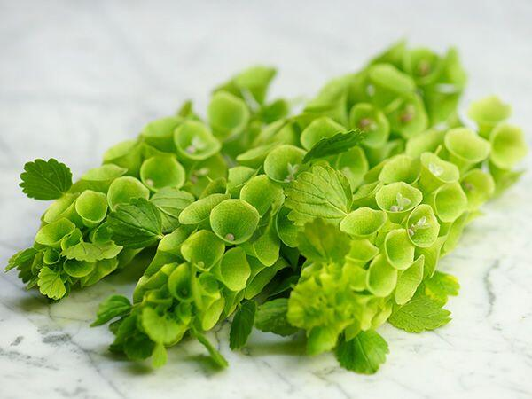 Молюцелла (Moluccella)