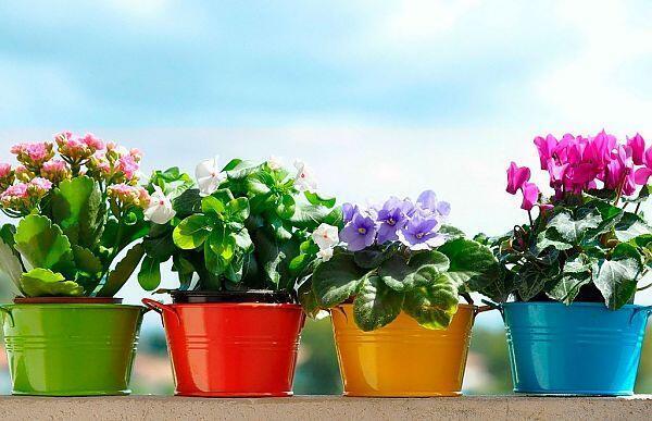 купить комнатные растения с доставкой