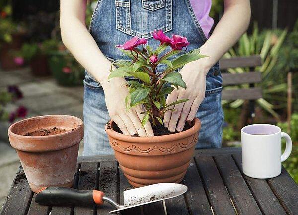 купить комнатные растения в минске